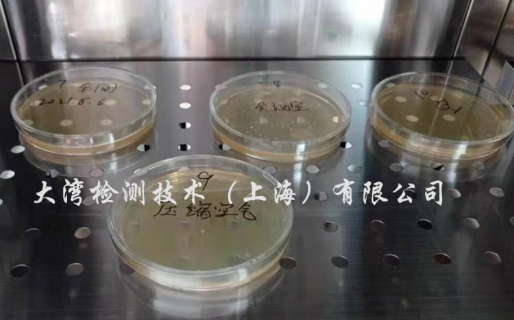 微生物培养皿